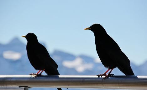 Vögel Berge