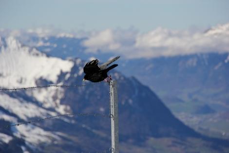 Vogel flieg