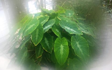 Pflanze beschlagen