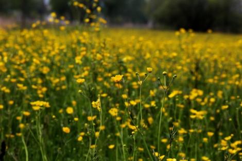 Foto Blumen (2)