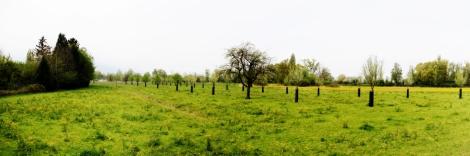 Panorama Wiese